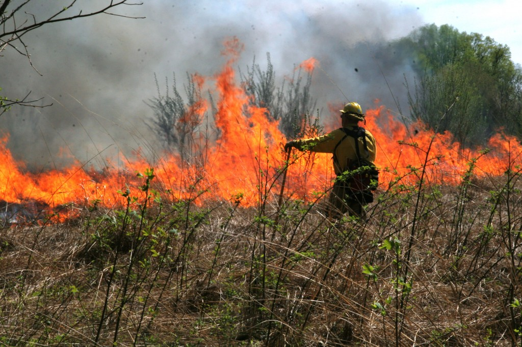 Delaware Forest Service veteran James Dowd of Townsend keeps a watchful eye on a controlled burn in a field at Blackbird State Forest as part of the agency's annual Fire Camp training session.