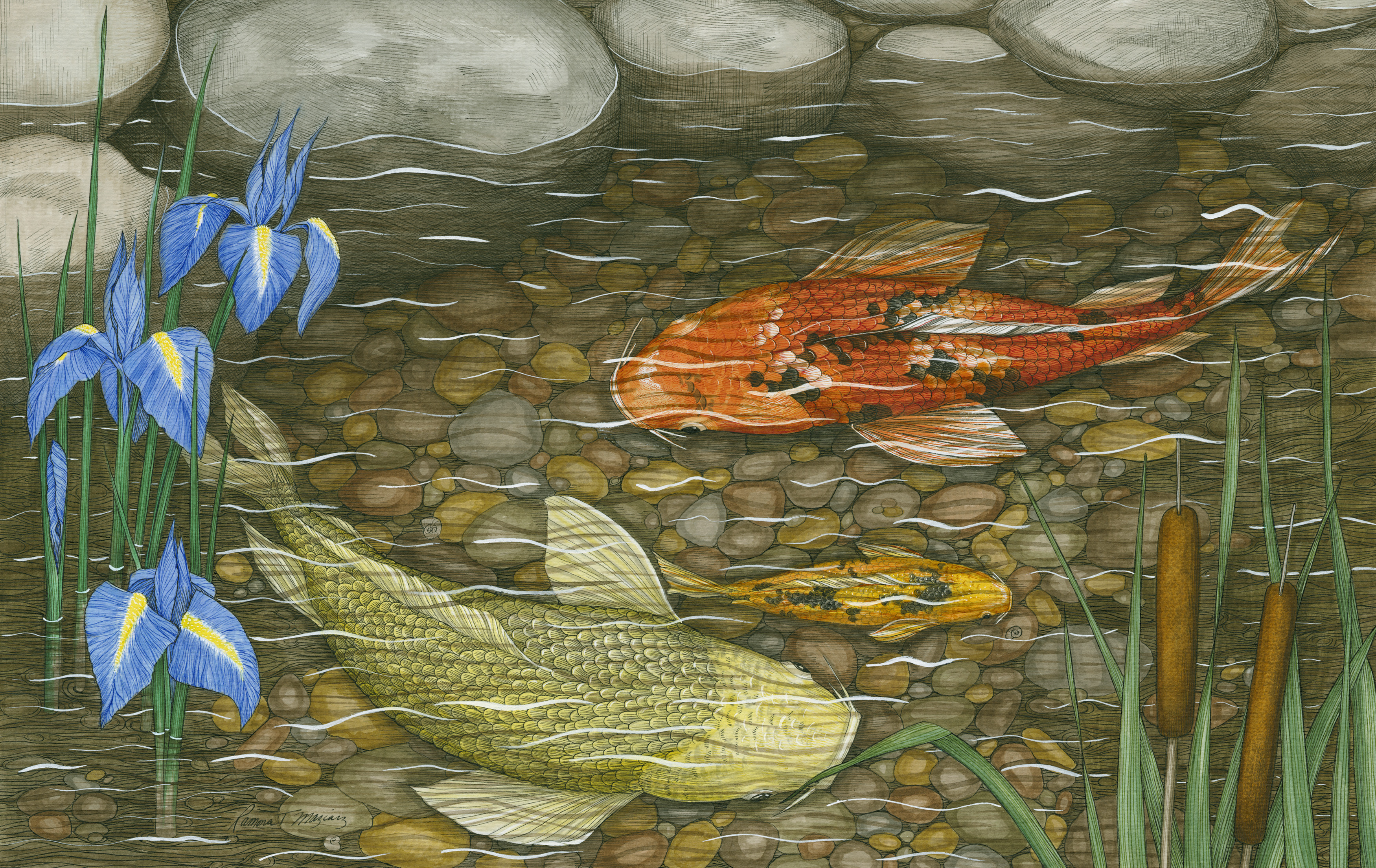 Ramona maziarz to display detailed pen and ink drawings in for Koi fish pond drawing