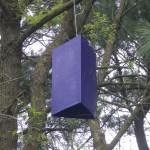 An Emerald Ash Borer trap hangs in a tree near Dover.