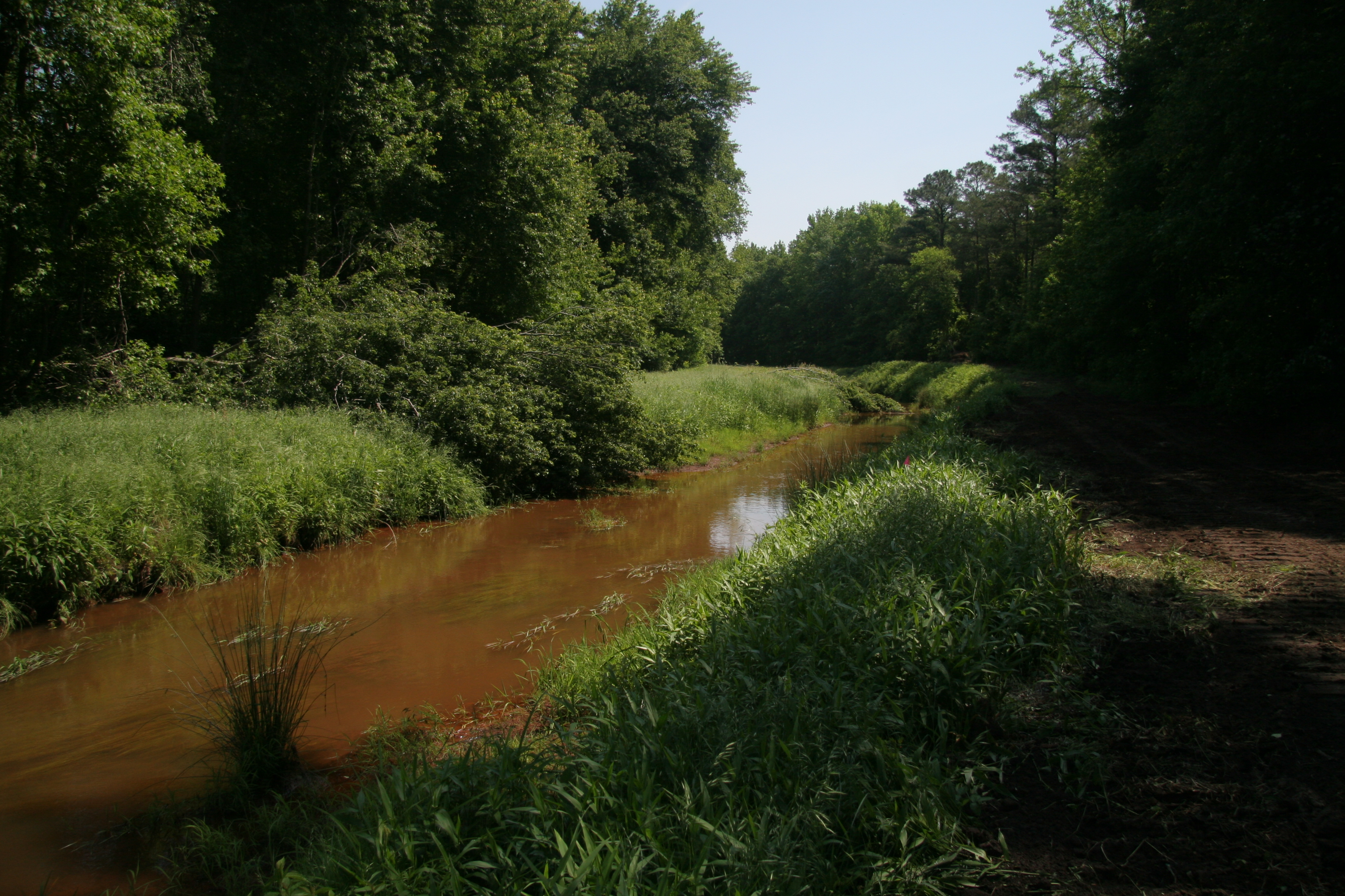 Redden State Forest Project Is Part Of Chesapeake Bay