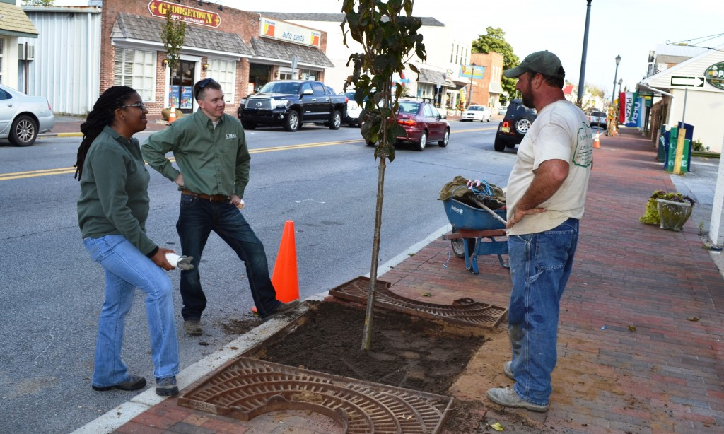 From left, Delaware Forest Service urban foresters Kesha Braunskill and Kyle Hoyd discuss the tree planting project with Mike Milligan of Bridgeville's Nanticoke Nursery and Landscaping, which performed the work and supplied the new trees.