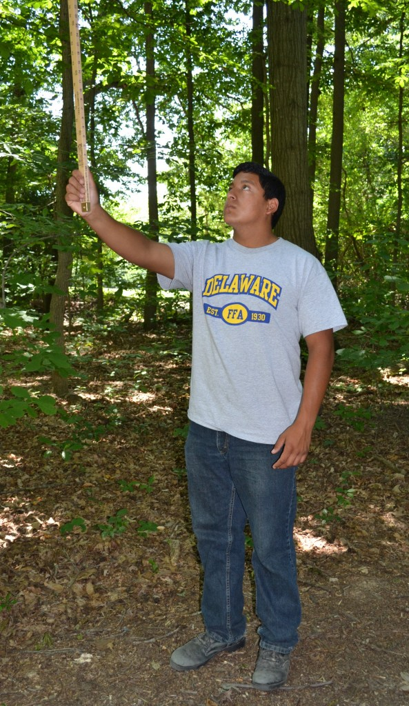 Recent Sussex Central graduate Ardany Coloma uses a Biltmore stick to measure tree height and estimate board-feet volume in the annual FFA forestry challenge.