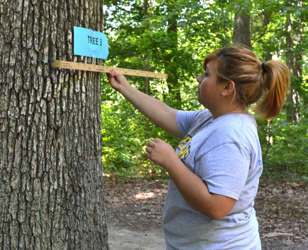 Ninth-grader Ari Ruiz of Sussex Central measures a tree using a Biltmore stick during the annual FFA forestry challenge.