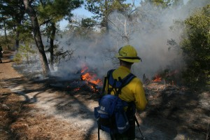 A Delaware Forest Service firefighter carefully monitors a controlled burn at Cape Henlopen State Park.  The DFS will conduct a prescribed fire on 74 acres west of Frankford beginning as early as next week.