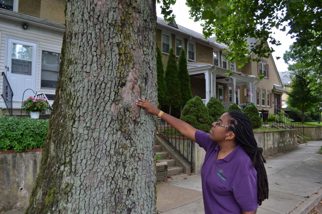 Delaware Forest Service urban forester Kesha Braunskill looks for signs of disease and decay on a street tree in New Castle County. More than half of the DFS' urban and community grants this year will fund hazard tree removals, primarily in New Castle County.