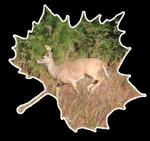 deer_leaf2