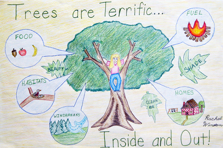 "This winning poster from a previous contest by Rachel Winston illustrates the 2015 Arbor Day Poster Contest theme: ""Trees are terrific... inside and out!"""