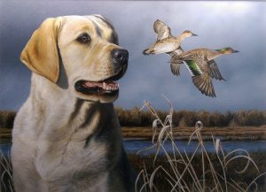 2016-17 Duck Stamp Winner