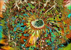 "Dandelion archival giclee mounted on aluminum 34"" x  48"" May 2015"