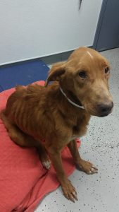 This is one of 14 severely neglected dogs rescued from a property in Millsboro.