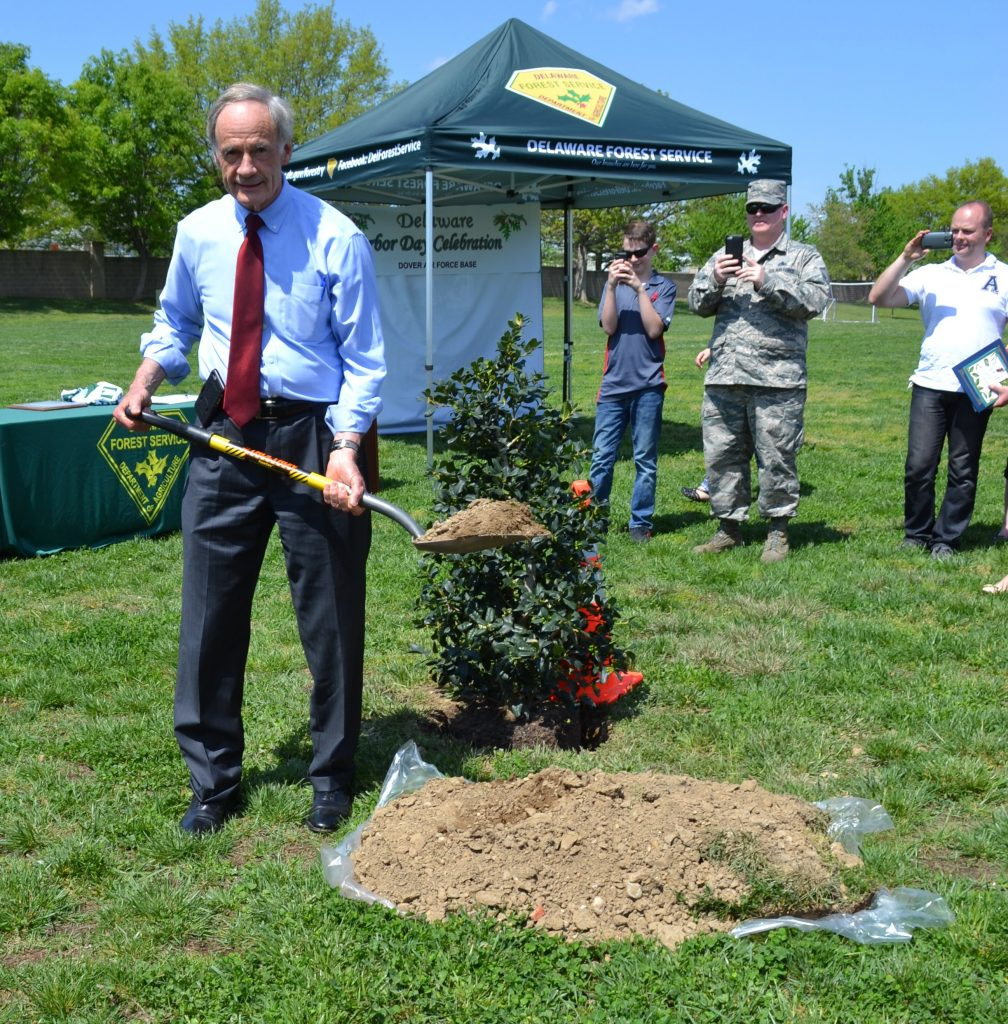 U.S. Senator Thomas R. Carper helped plant an American holly tree at Dover Air Force Base to commemorate Arbor Day in the First State. (photo by John Petersen, Delaware Forest Service).