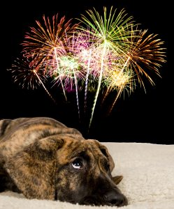 Dog looks frightened by fireworks
