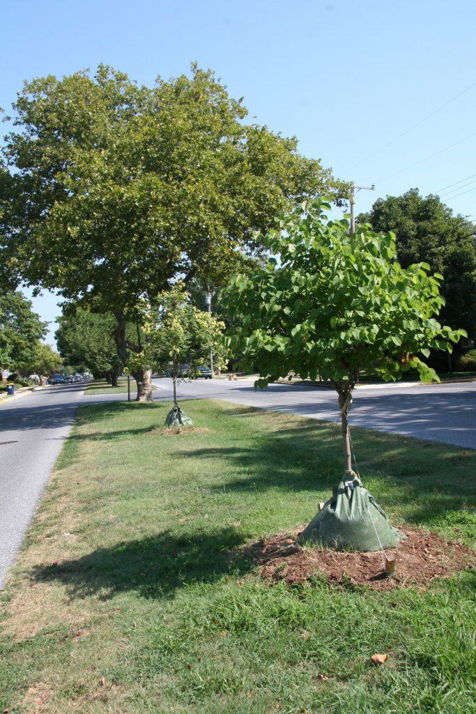 Delaware urban grant project