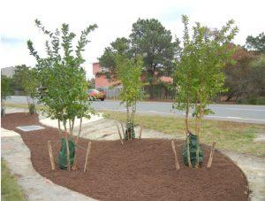 tree planting in Delaware