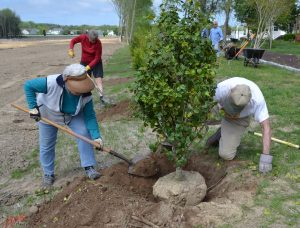 2018 Rehoboth Beach tree planting