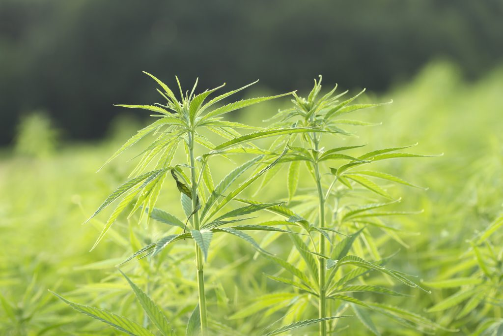 Delaware second state on east coast for USDA hemp plan approval