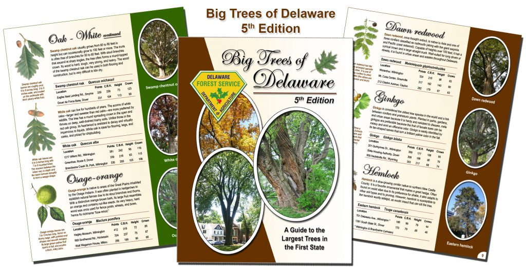 Big Trees of Delaware 5th Edition