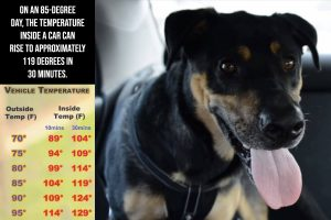 Photo of vehicle temperature guide and dog