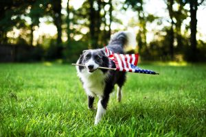 Photo of a dog running with an American flag