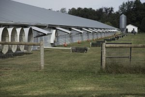 outside of Delaware organic poultry house