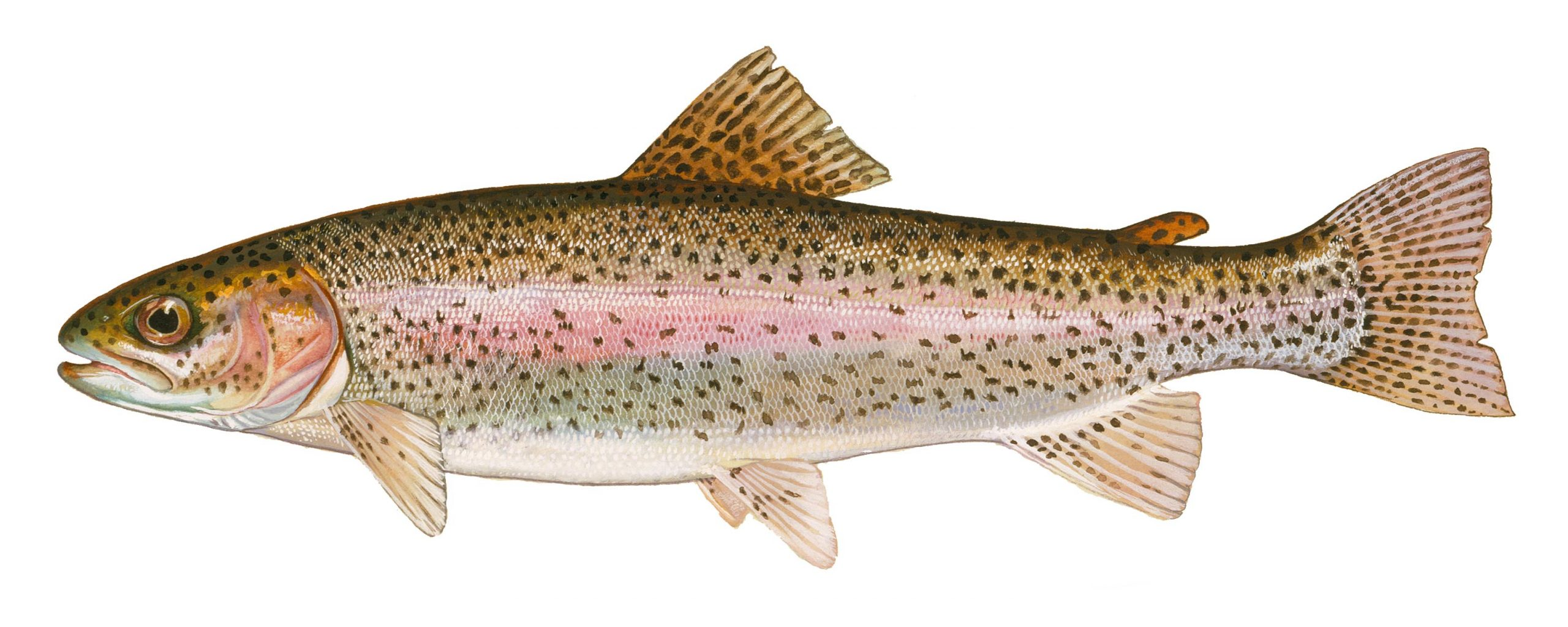 Trout Pond Open Christmas Day 2020 Spring trout stocking and March 7 season opening at downstate