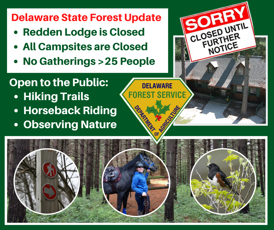 State Forest Changes