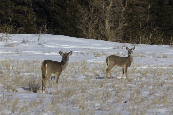 A photo of deer in field