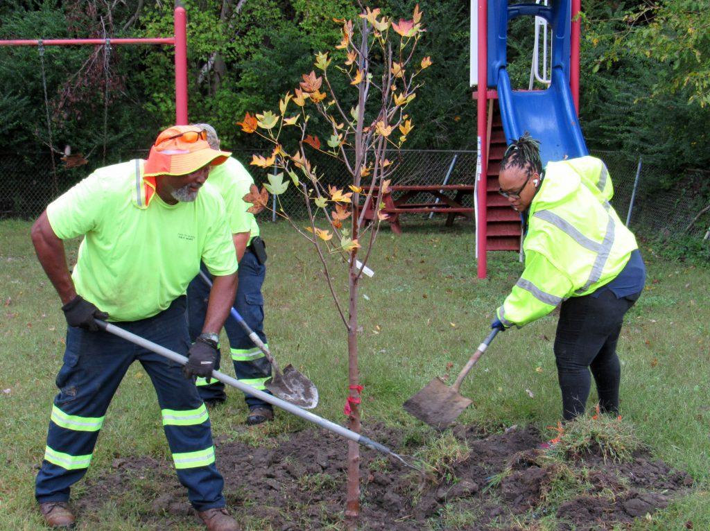 Delmar tree planting project