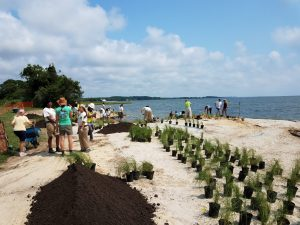 Maryland Coastal Bays Program's Assateague Living Shoreline Project