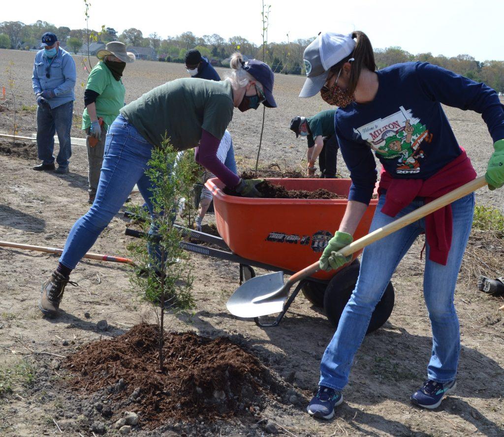 Milton Tree Planting 2