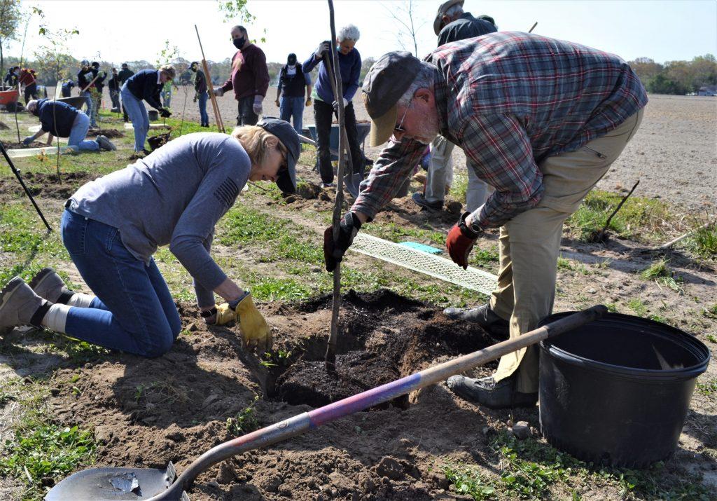 Milton tree planting 3