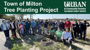 Milton Tree Planting
