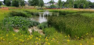 Tidewater Park - Laurel