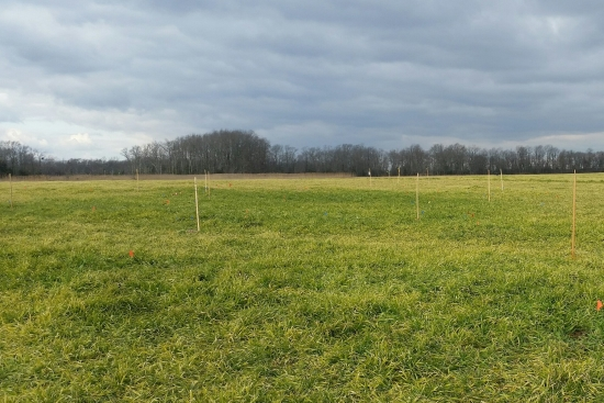 Photo showing the location of the African burial ground in a field at the John Dickinson Plantation.