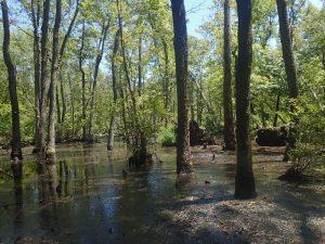 Chester-Choptank Wetland